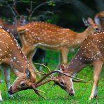 Wild Life & NATURE